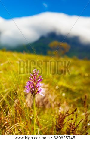 Pink Flower And Mountains Covered With Clouds In Background. Gimsoya Island Landscape, Nordland Coun