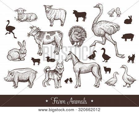 Farm Animals Handdrawn Vintage Set With Cow, Sheep, Pig, Horse, Ostrich, Guard Dog, Duck, Rabbit, Go