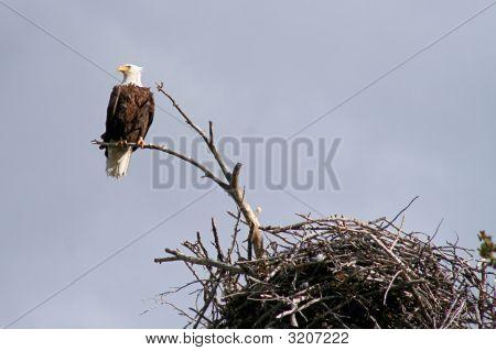 Eagle Survey Close Up