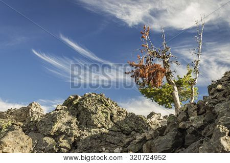 A Lonely Tree In The Volcanic Rock At Newberry National Volcanic Monument, Oregon