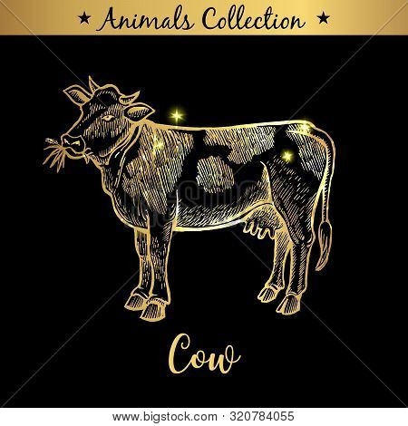 Golden And Royal Hand Drawn Emblem Of Farm Cow Animal. Butchery Shop Branding, Meat Products. Butche