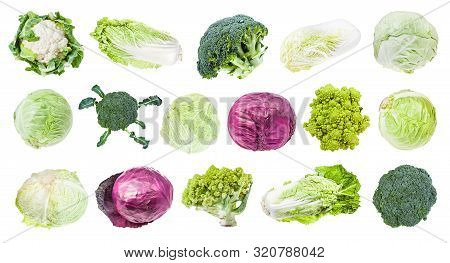 Many Various Headed Cabbages (romanesco, Broccoli, Cauliflower, White Cabbage, Red Cabbage, Napa Cab
