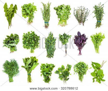 Bunches Of Fresh Edible Greens (mizuna, Lemon Balm, , Mentha, Thyme, Coriander, Cilantro, Basil, Par