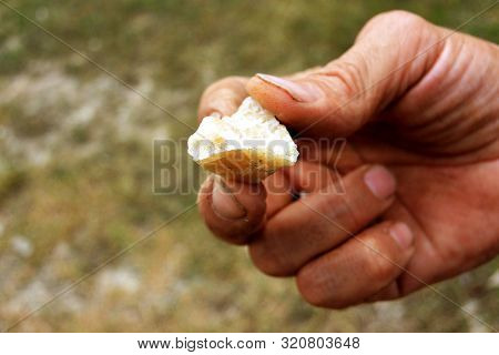 Honey-colored Quartz Druse In The Hands Of A Miner