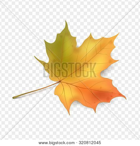 Maple Leaf On Vector Photo Free Trial Bigstock