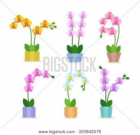 Flowering Orchids. Flat Icon Set. Exotic Tropical Flowers In The Pots. Blooming Phalaenopsis Housepl