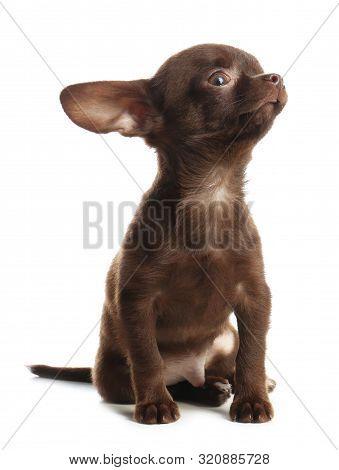 Cute Black Dog With Neckerchief Sitting Near Light Wall In Room