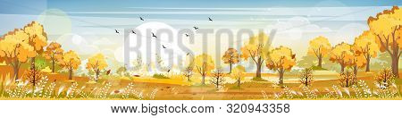 Panorama Of Countryside Landscape In Autumn, Vector Illustration Of Horizontal Banner Of Autumn Land