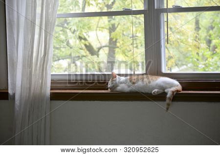 Kitten Napping in Window with Fall Trees poster