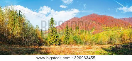 Spruce And Birch Forest On The Meadow In Mountains. Beautiful Autumnal Panoramic Landscape Of Carpat