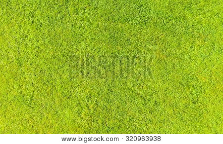 Aerial Top View Of Green Fresh Summer Lawn In Park. Natural Textured Background. Top View From Drone