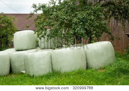 Silage Bales Stored In Meadow On A Farmyard, Hay Conservation And Fermentation