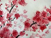 Cherry Blossom watercolor on paper poster