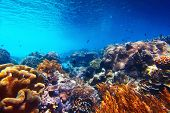 Underwater shoot of vivid coral reef with a tiny fishes in clear water poster