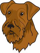 Illustration of a brown airedale terrier dog poster