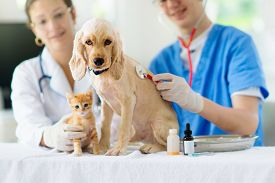 Vet Examining Dog And Cat. Puppy And Kitten At Veterinarian Doctor. Animal Clinic.