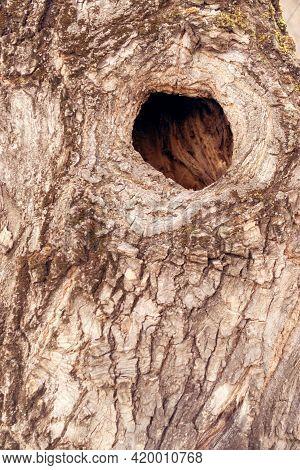 A Hollow In A Tree Trunk. Bird Nest.
