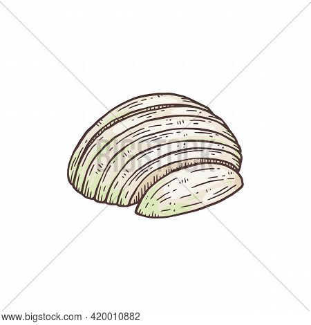 Peeled And Sliced Half Of White Onion Engraving Vector Illustration Isolated.
