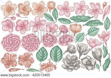 Vector Set Of Hand Drawn Pastel Hibiscus, Plum Flowers, Peach Flowers, Sakura Flowers, Magnolia Flow