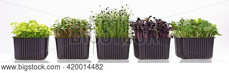 Several Containers With Microgreens On A White Background. Microgreens Of Different Varieties On A B