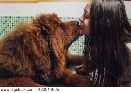 Professional Groomer Comb The Dogs Paw, Grooming Dogs At Veterinary Clinic, Take Care Of Pedigree Do