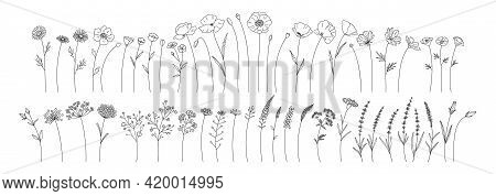 Wildflowers Set, Line Style Hand Drawn Flowers. Meadow Herbs, Wild Plants, Botanical Elements For De