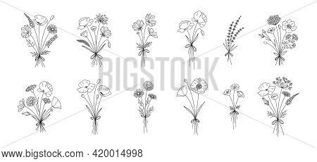 Wildflower Line Art Bouquets Set. Hand Drawn Flowers, Meadow Herbs, Wild Plants, Botanical Elements