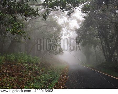 Spectacular View Of Misty Forest In Kinnakorai, Tamilnadu, India.