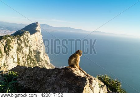 Monkey Lives In A Natural Forest. Island Of Monkeys.