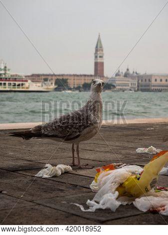 European Herring Gull Larus Argentatus Seagull Bird In Front Of Charming Picturesque Historic Colour