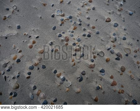 Closeup View Of A Collection Of Different Coloured Sea Shells Mussels On Sand Beach Noorderhoofd Wes