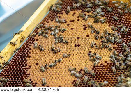 Bee Hive On Honeycomb. Bees Produce Fresh, Healthy, Honey. Beekeeping Concept