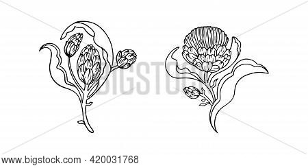 Hand Drawn Artichoke Isolated On White. Vector Line Art Illustration Of Artichokes With Leaves On Wh