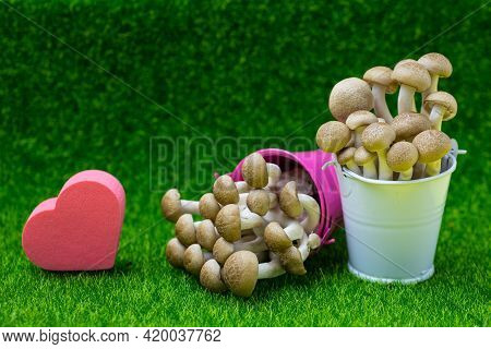 Hon-shimeji  Mushroom Or Bunna-shimeji (hypsizygus Marmoreus) In Pink And White Small Bucket With Lo