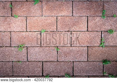 Red Brick With Small Green Tree Growth On Floor, Cover By Grass And Plants, Natural Texture Backgrou
