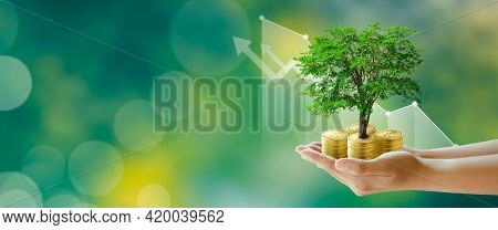 Hand Holding Growing Tree On Coins With Stock Graph Over Green Background. Saving Ecology, Csr Green