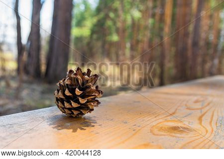 A Pine Cone Lies On An Old Wooden Surface In The Forest. One Pine Cone Is Lying On A Park Bench. Spr