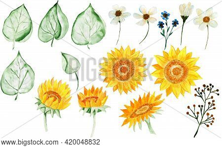 Set Of Watercolor Sunflowers And Leaves. Bouquet Of Sunflowers. Watercolor Flower Arrangement. Illus