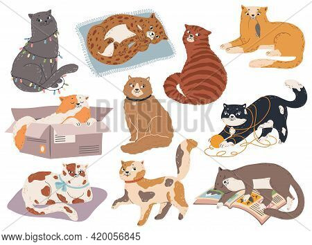 Cute Cats. Funny Kittens Sleep, Play And Sit, Catch Mouse. Kitty In Various Pose, Happy And Sad Cat.