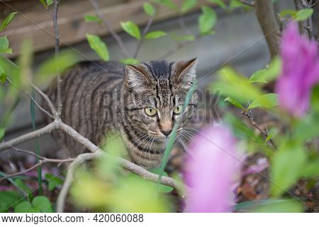 Curious cat in the garden