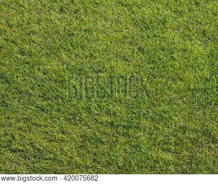 Natural Green Grass. Grass Texture Or Grass Background. Green Grass Texture Background