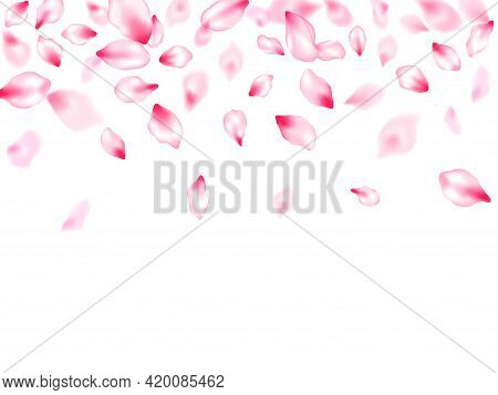 Pink Sakura Petals Confetti Flying And Falling Windy Blowing Background. Flower Blossom Parts Romant