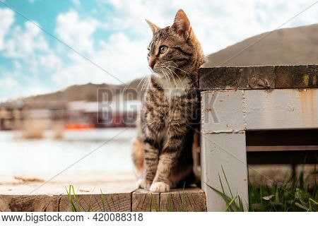 Protection Of Pets. A Stray Tabby Cat Sits Near The Steps. World Cat Day Concept.