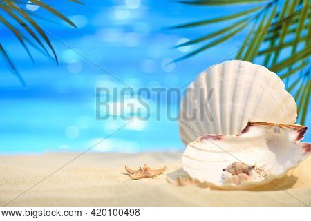 Pectinida Seashell, Starfish And Other Saltwater Clams On The White Sand Beach. Seashore On A Sunny