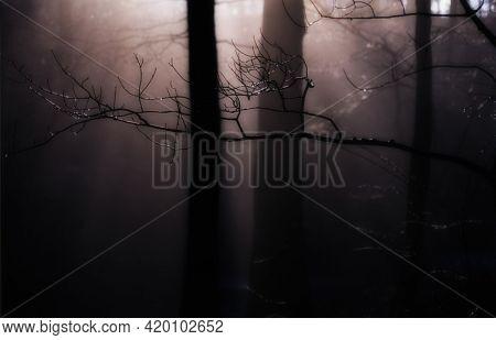 Spooky forest landscape. 3D rendering