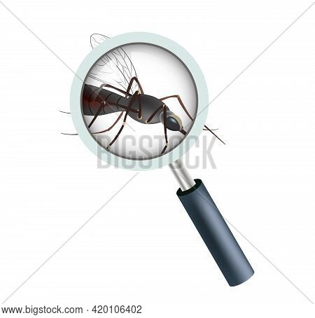 Realistic Illustration Of A Mosquito. Insect. Realistic Mosquito. Realistic Mosquito, Fly Sucker, Gn