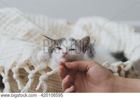 Hand Caressing Cute Little Kitten On Soft Blanket In Basket. Portrait Of Adorable Grey And White Kit