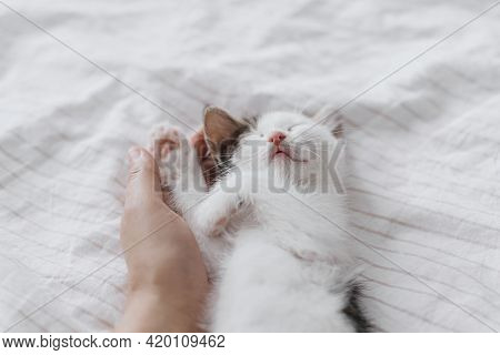 Hand Hugging Cute Sleeping Little Kitten On Soft Bed. Adoption Concept. Owner Caressing Adorable Sle