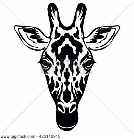 Mascot. Head Of Giraffe. Vector Illustration Black Color Front View Of Wild Animal Isolated On White
