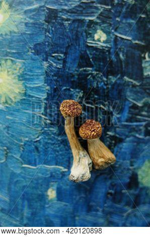 Psilocybe Cubensis Mushrooms Isolated On Grey Background. Psilocybin Psychedelic Magic Mushrooms Gol